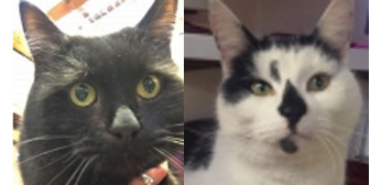 Madame Cholet and Mikey, from Cramar Cat Rescue & Sanctuary, Birmingham, homed through Cat Chat