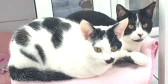 Ebony & Sparky from National Animal Welfare Trust, Clacton-on-sea, homed through Cat Chat