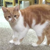 Gus & Frank from Nuneaton & Hinckley Cats in Need, Hinkley, homed through Cat Chat