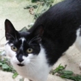 Annie Mary, from Maesteg Animal Welfare Society, Bridgend, homed through Cat Chat