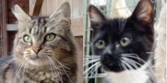 Bubbles & Teddy, from Maesteg Animal Welfare Society, Bridgend, homed through Cat Chat