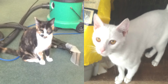 Aryia, Moritz, Chalky & Cody from Grendon Cat Shelter, Atherstone, homed through Cat Chat