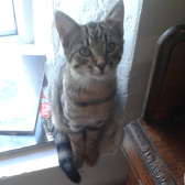Chester, from Second Chance Cats Rescue, Biggar, homed through Cat Chat