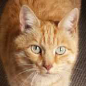Fudge, from Burton upon Stather Cat Rescue, Scunthorpe, homed through Cat Chat