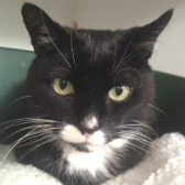 Sylvester from City Cat Shelter, Brighton, homed through Cat Chat