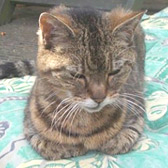 Tabitha from Lucky Cat Rescue, Skegness, homed through Cat Chat