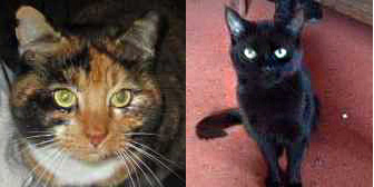 Bella & Marley, from Furry Friends Animal Rescue, Coulsdon, homed through Cat Chat