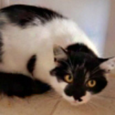 Lily, from Beverley & Pockington Cats Protection, Beverley, homed through Cat Chat