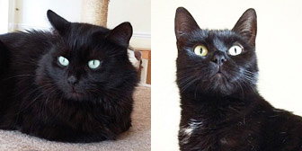 Suki & Sparky, from Trafford Cats Protection, Manchester, homed through Cat Chat