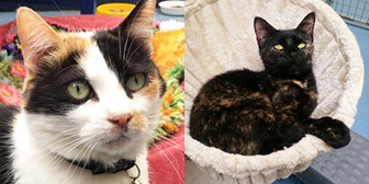 Tia & Angel, from Mitzi's Kitty Corner, Totnes, homed through Cat Chat