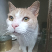 Hendry from Whinnybank Cat Sanctuary, Newburgh, homed through Cat Chat
