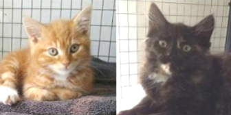 Herbert & Hilda from Yorkshire Animal Shelter, Leeds, homed through Cat Chat