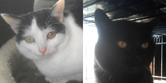 Momo & Sooty from Animal Concern Cumbria - North Lakes and Solway, Carlisle, homed through Cat Chat