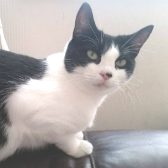 Tinkerbell from Purrs Cat Rescue, Hornchurch, homed through Cat Chat