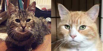 Kane & Guinness, from HappyCats Rescue, Bordon, homed through Cat Chat