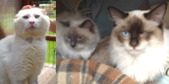 Marley, Sweetness & Stardust from Rolvenden Cat Rescue, Rolvenden, homed through Cat Chat