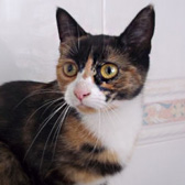 Chloe, from Royston Animal Welfare, Barnsley, homed through Cat Chat