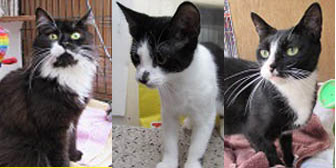 Elizabeth, Keith & Cleo, from Ann & Bill's Cat & Kitten Rescue, Hornchurch, homed through Cat Chat