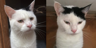 Jasmine & James, from Kirkby Cats Home, Nottingham, homed through Cat Chat