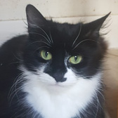Noomi, from Raven's Rescue, Dudley, homed through Cat Chat