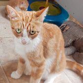 Portia, from Beverley & Pocklington Cats Protection, East Yorkshire, homed through Cat Chat