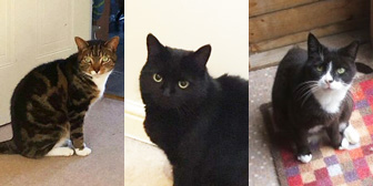 Rocco, Macey & Skye, from Little Cottage Rescue, Luton, homed through Cat Chat