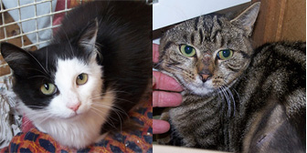 Trixie & Alex, from Cat Rescue Chippenham, Wiltshire, homed through Cat Chat