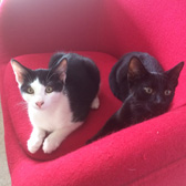 Alfie & Charlie, from Leeds Cat Rescue, homed through Cat Chat