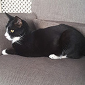 Alfie, from Babs Cats, Swanley, homed through Cat Chat