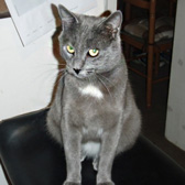 Dougie, from Cats in Distress, Frome, homed through Cat Chat