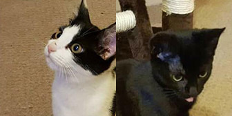Floss & Oreo, from Yorkshire Animal Shelter, Leeds, homed through Cat Chat