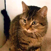 Jake, from Rugeley Cats Society, Staffordshire, homed through Cat Chat