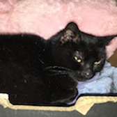 Lilly, from RSPCA Stort Valley, Harlow, homed through Cat Chat