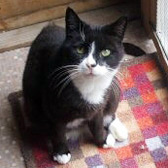 Skye, from Little Cottage Rescue, Luton, homed through Cat Chat