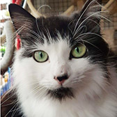Vonnie, from Rugeley Cats Society, Staffordshire, homed through Cat Chat