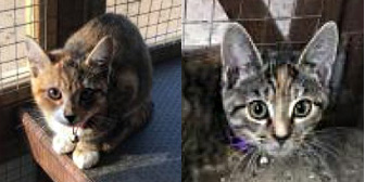 Loca, Chica, Vixen & Vinyl, from All Animal Rescue, Southampton, homed through Cat Chat