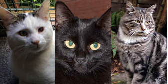 Max, Polly & Snuffles, from Burton Joyce Cat Rescue, Nottingham, homed through Cat Chat