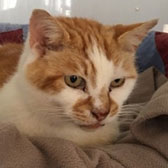 Mr Bojangles, from All Animal Rescue, Southampton, homed through Cat Chat