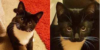 Rosie & Jim, from All Animal Rescue, Southampton, homed through Cat Chat