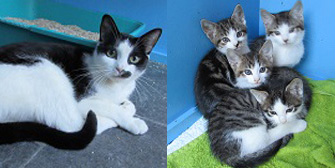 Smudge & kittens, from Ann & Bill's Cat & Kitten Rescue, Hornchurch, homed through Cat Chat