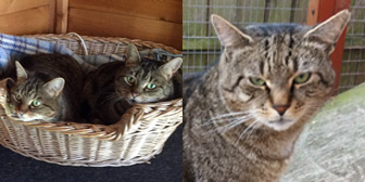 Tabitha, Kitty & Binx, from Cats Friends, Rothwell, homed through Cat Chat