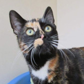 Mittens, from Lina's Cat Rescue, Derby, homed through Cat Chat