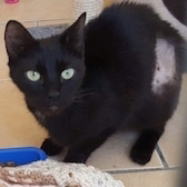 Roxy, from RSPCA Durham & District, Durham, homed through Cat Chat