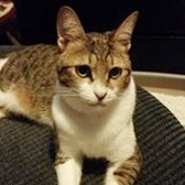 Qat, from HappyCats Rescue, Bordon, homed through Cat Chat