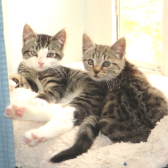 Mallie & Miffy from Somerset and Dorset Animal Rescue, Wincanton, homed through Cat Chat