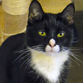 Logan from National Animal Welfare Trust, Thurrock, homed through Cat Chat