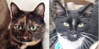 Olly, Kev and others, from Maesteg Animal Welfare Society, Bridgend, homed through Cat Chat