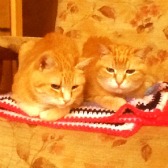 Saffie & Frankie from Glasgow Cats Protection, rehomed through Cat Chat