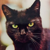 Pepper, from Feline Friends, London, homed through Cat Chat