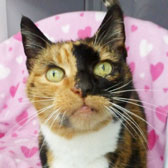 Maisie, from National Animal Welfare Trust, Clacton homed through Cat Chat